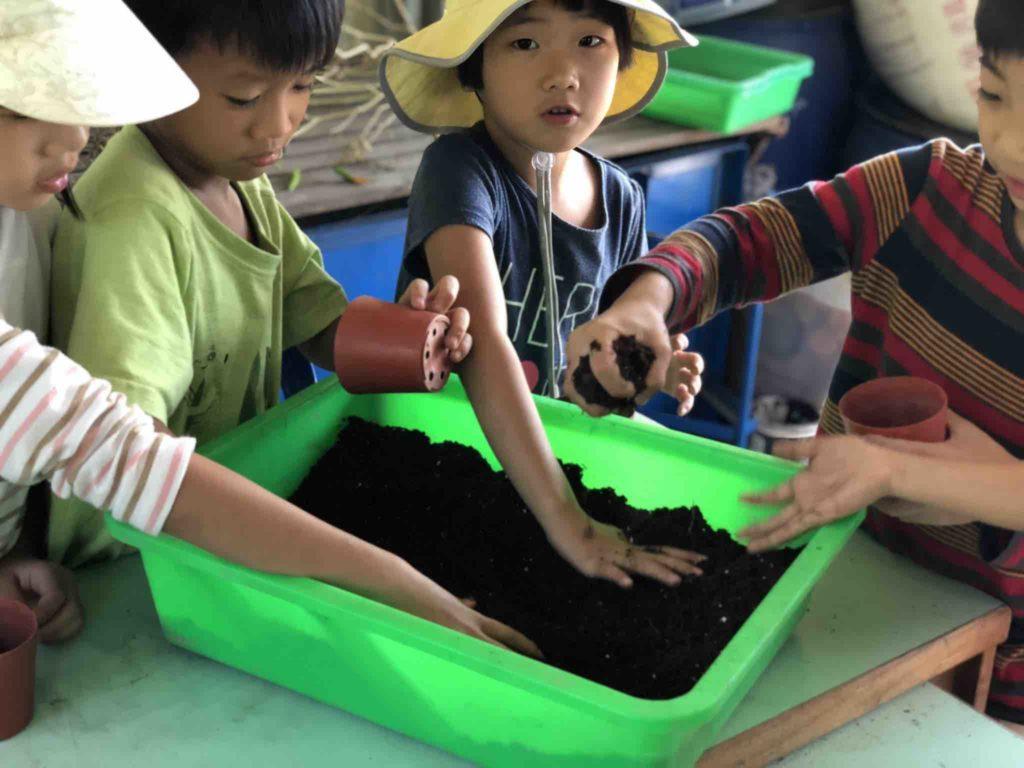 照海華徳福國小園藝課一年級培養土